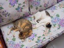 一起睡觉两只的猫 免版税库存照片