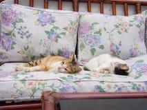 一起睡觉两只的猫 免版税库存图片