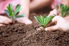 一起种植在黑土壤的父母和孩子年轻树 免版税图库摄影