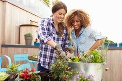 一起种植屋顶庭院的两个女性朋友 免版税库存图片