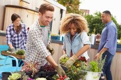 一起种植屋顶庭院的小组朋友 免版税库存照片