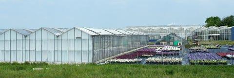 一起老温室品种在韦斯特兰地区 免版税库存照片