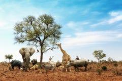 一起见面在树附近的非洲徒步旅行队动物 库存图片