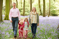 一起走通过会开蓝色钟形花的草森林的家庭 库存照片
