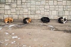 一起滑倒逗人喜爱的四条街道的狗 免版税库存照片