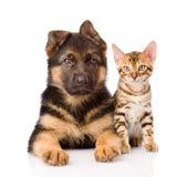 一起说谎一点孟加拉猫和德国牧羊犬的小狗 库存照片