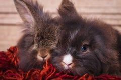 一起说谎在一条红色围巾的狮子顶头兔子bunnys 免版税库存照片
