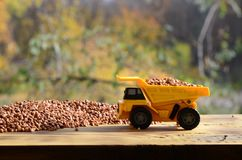 一辆小黄色玩具卡车用荞麦棕色五谷在荞麦堆附近的装载 木表面上的一辆汽车反对ba 免版税图库摄影