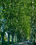 驾驶通过树隧道  免版税图库摄影