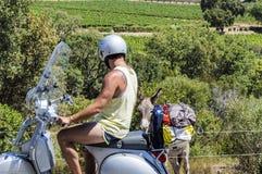 一辆滑行车的人在一头驴附近在普罗旺斯的葡萄园里在夏天 库存图片
