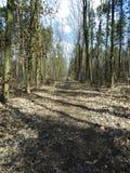 一辆自行车的穿蓝衣的男孩在秋天森林里 库存图片