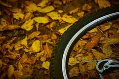 一辆自行车的轮子反对黄色叶子背景的  图库摄影