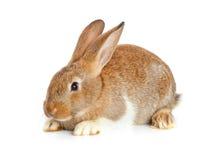 一逗人喜爱的兔子开会 免版税图库摄影