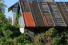 一部分的一个老农村房子的屋顶植物丛林的  免版税库存图片