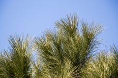 一部分的一棵树在一个庭院里视线内 免版税图库摄影