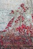 一部分的一棵树在一个庭院里视线内 免版税库存照片