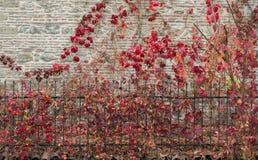 一部分的一棵树在一个庭院里视线内 免版税库存图片