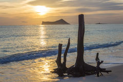 在Waimanalo日出的死的树 库存图片
