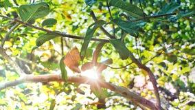 一部分的与阳光的自然绿色树 免版税图库摄影