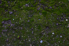 一部分的与青苔和草的地面区域 库存照片