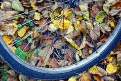 一部分的在下落的叶子的自行车车轮在公园 图库摄影