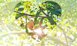 一部分的在心脏形状面具的自然树 库存图片