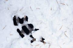 一部分的在雪下的出入孔 免版税库存照片