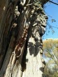 一部分的干燥木头树干  免版税库存图片