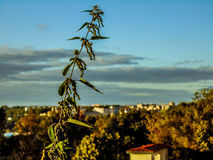 一部分的斯摩棱斯克市 免版税库存照片
