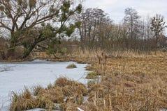 一部分的有干燥支持的芦苇和草的一个冻湖 图库摄影