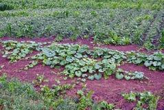 一部分的有绿色植物灌木的一个农村庭院 免版税库存图片