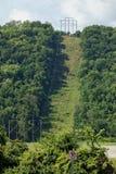 一部分的森林为公共线清除了 图库摄影