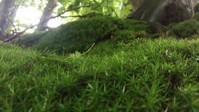 一部分的森林 免版税库存照片