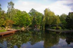 一部分的池塘在日本庭院里 图库摄影
