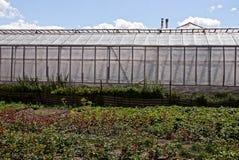 一部分的温室由玻璃和影片制成在绿叶和植被中在庭院里 图库摄影