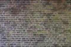 一部分的非常有青苔的老砖墙 库存图片