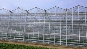 一间大玻璃温室的全景 外部现代温室 玻璃新的温室的出现 影视素材