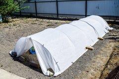 一间温室在庭院里 菜生长幼木在t的 免版税库存图片