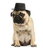 戴一顶高顶丝质礼帽的哈巴狗小狗的正面图,坐 免版税图库摄影