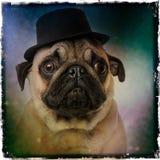 戴一顶高顶丝质礼帽的哈巴狗 免版税库存图片