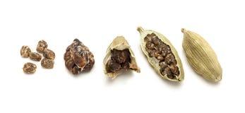 一颗充分和一颗破裂的有机肉豆蔻种子的宏观特写镜头 免版税库存图片