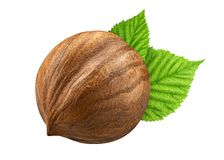 一颗榛子隔绝了特写镜头,不用与叶子的壳作为成套设计元素 在白色背景的新鲜的欧洲榛树 坚果宏指令 免版税库存照片