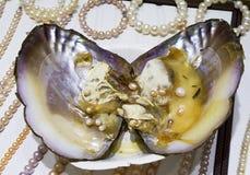 一颗珍珠的诞生在壳的 免版税图库摄影