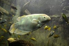 一鱼 免版税库存图片