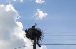 一, 1只雏鸟,坐在巢的小鱼苗野生鹳反对 图库摄影
