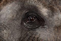 一头亚洲大象的眼睛 免版税库存图片