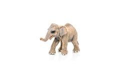 一头亚洲大象的缩样在白色背景的 库存照片