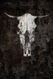 一头公牛的鬼的头骨在黑背景的 库存照片