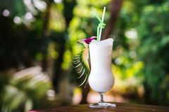 一份冷的饮料在热带 图库摄影