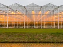一间商业玻璃温室的背景 免版税库存照片